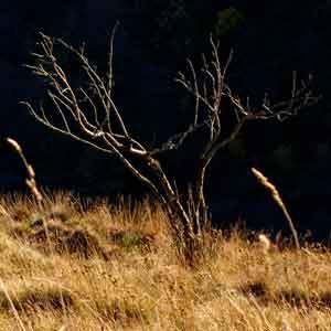 un arbre sec
